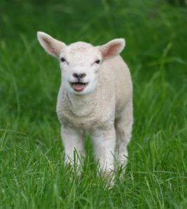 children's poetry dr-nanaplum-amazingbooksforchildren,com, A young lamb in a field in Kent, in England. Copyright law_keven from Flickr. http://londongirl.hubpages.com/hub/5-great-Easter-family-activities---cheap-and-fun#